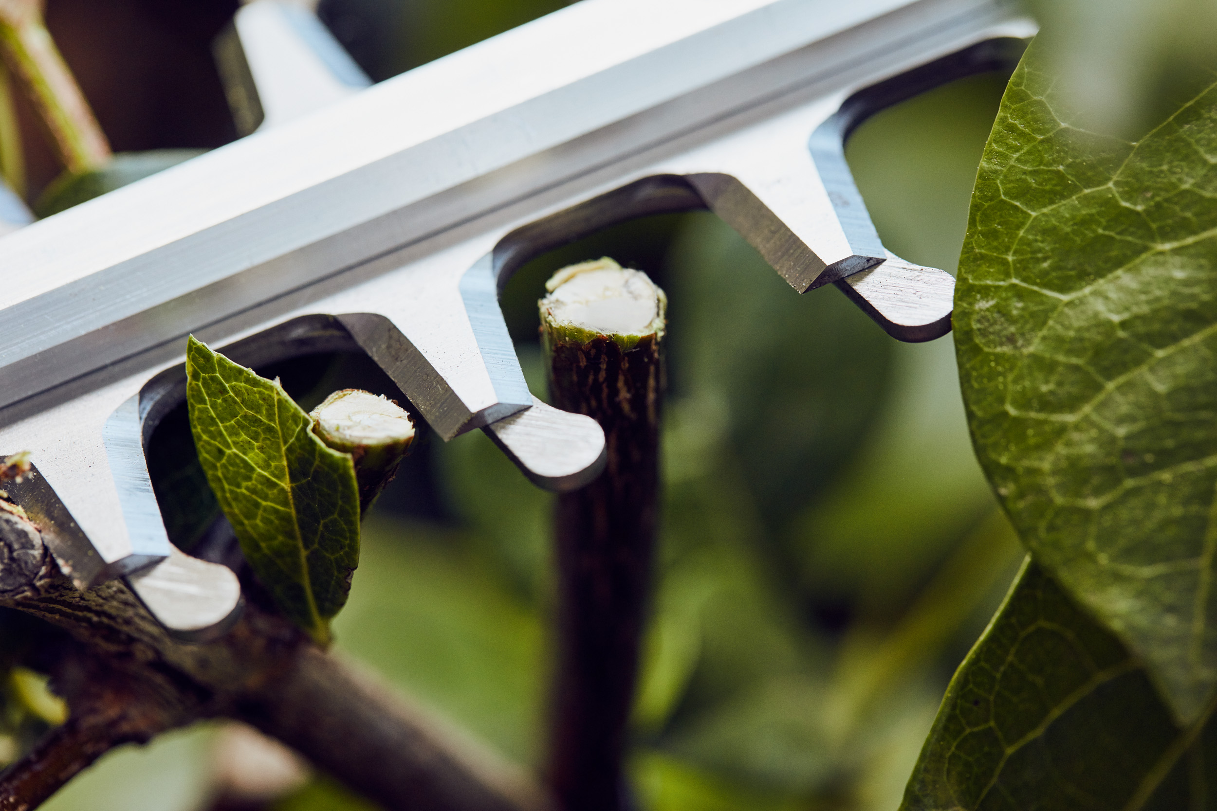 כלי גינון לגיזום גדר חי